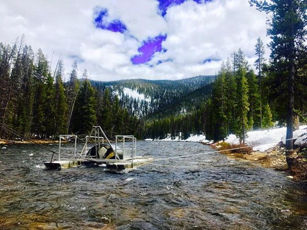 Fish and Wildlife RST - Salmon
